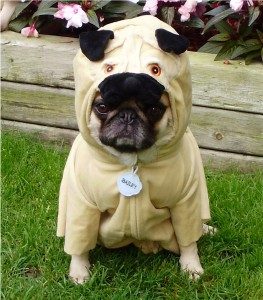 pug in a pug costume pugception 263x300 League Partners   Not Going Public With Current Prospectus