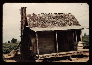 An old tenant house with a mud chimney and cotton growing up to its door, which is occupied by Mulattoes, Melrose, La.  (LOC)